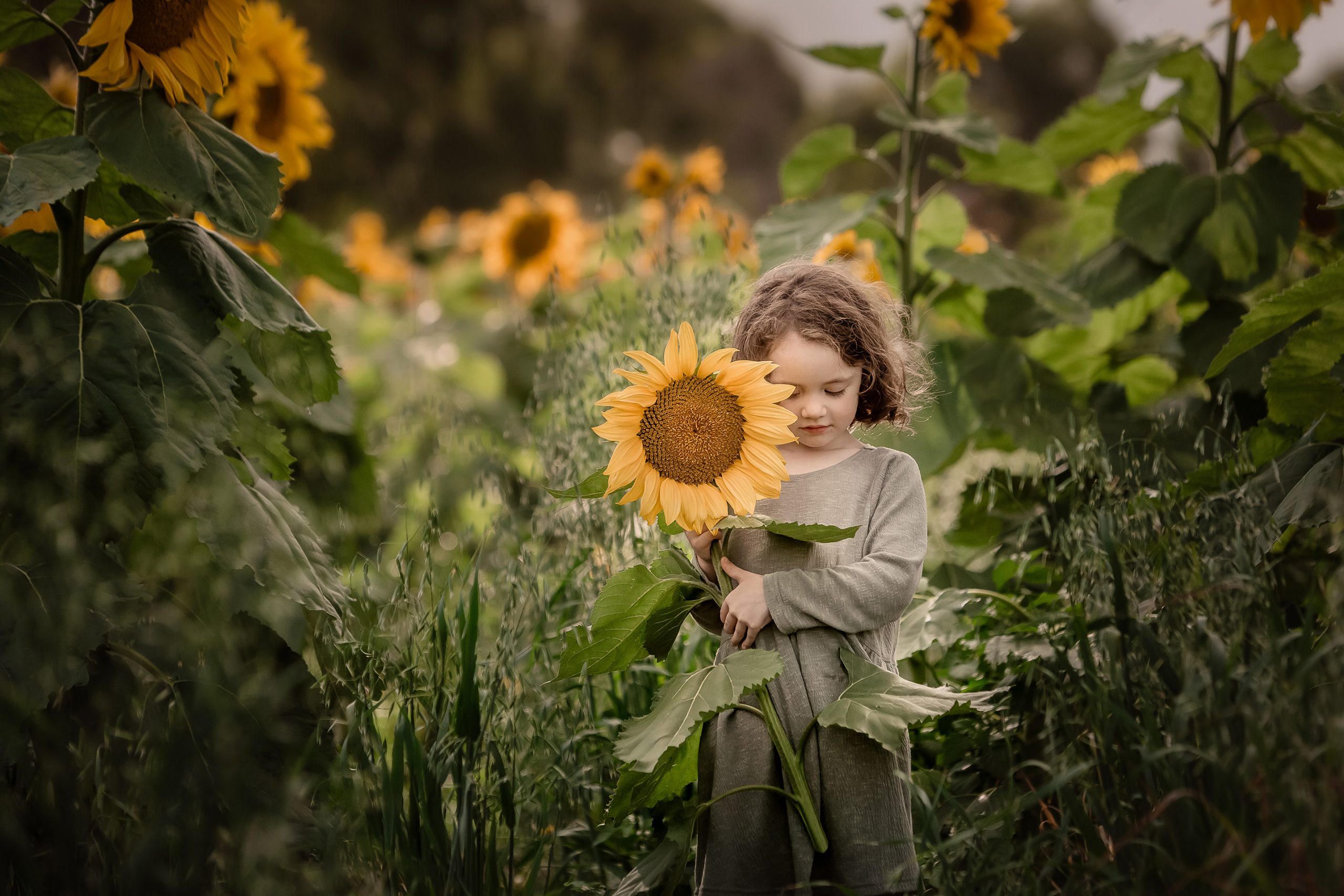 Sunflower field children photography